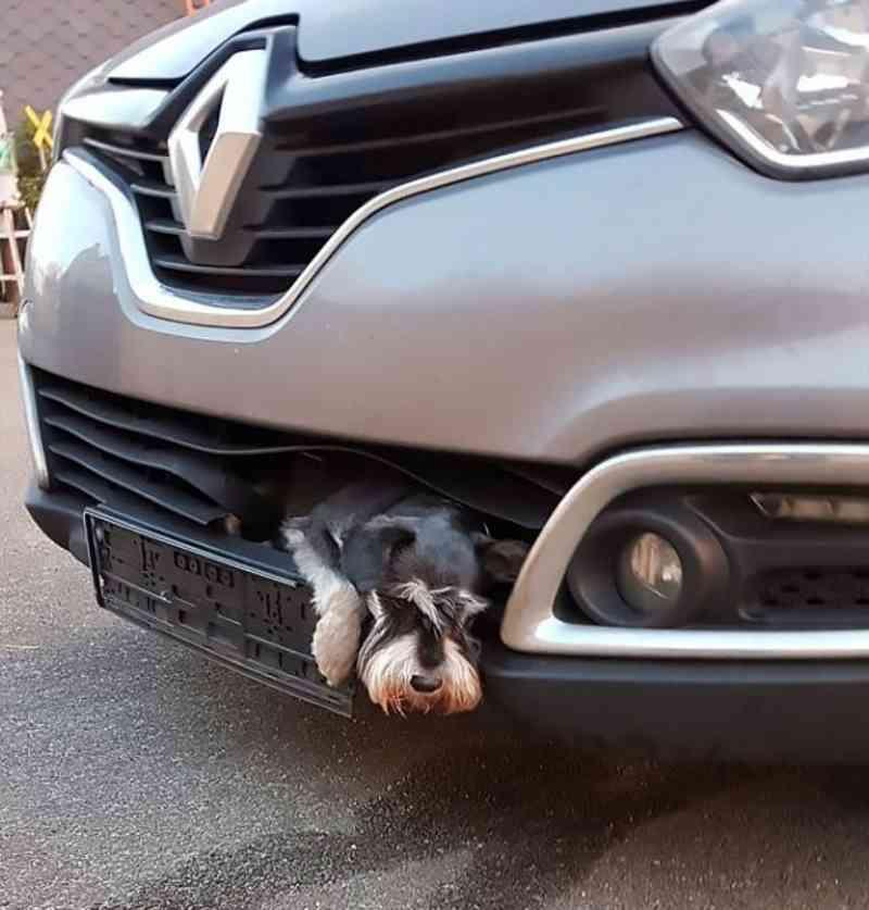 Cachorro é Atropelado E Viaja Em Para Choques Por 25 Quilômetros
