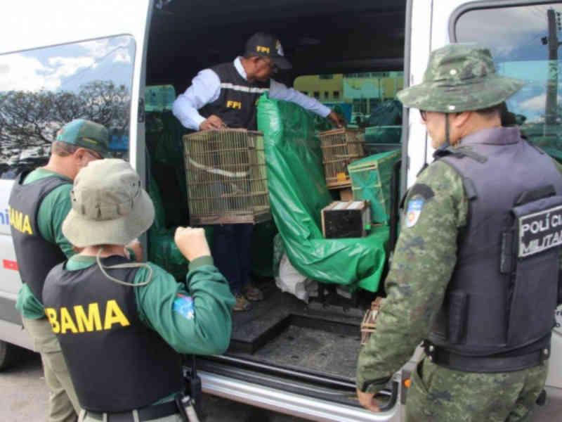 FPI resgata mais de mil animais silvestres em uma semana no Sertão de Alagoas