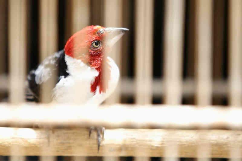 Cerca de 200 animais silvestres são resgatados em dois dias no Sertão de Alagoas