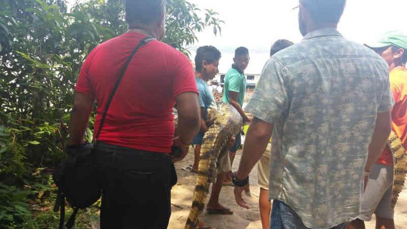 Ibama usa agentes disfarçados de turistas em operação contra exploração de animais silvestres, no AM