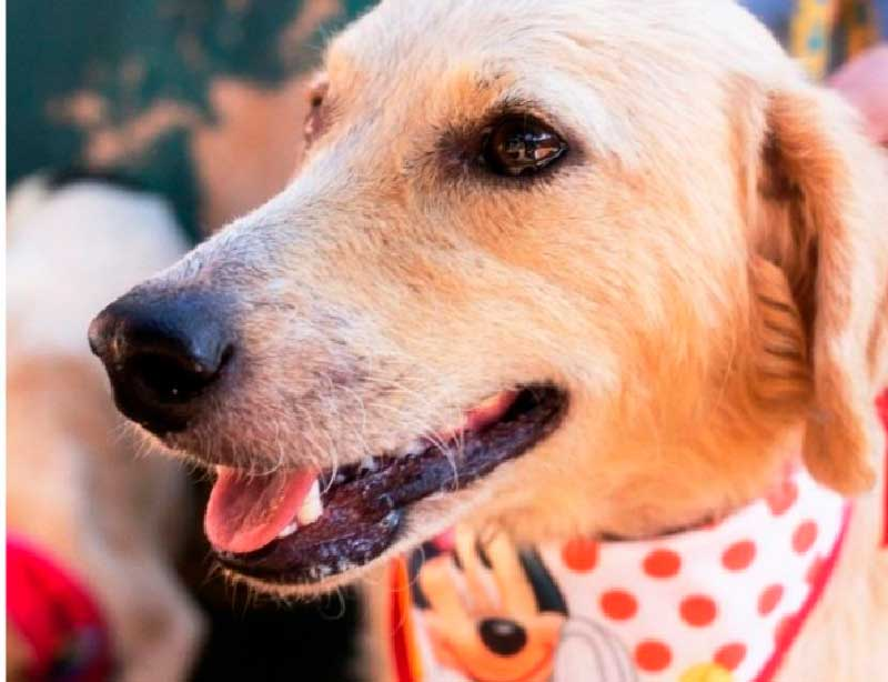 Prefeitura de Araras, SP, realiza a 10ª edição da Feira de adoção de Cães e Gatos