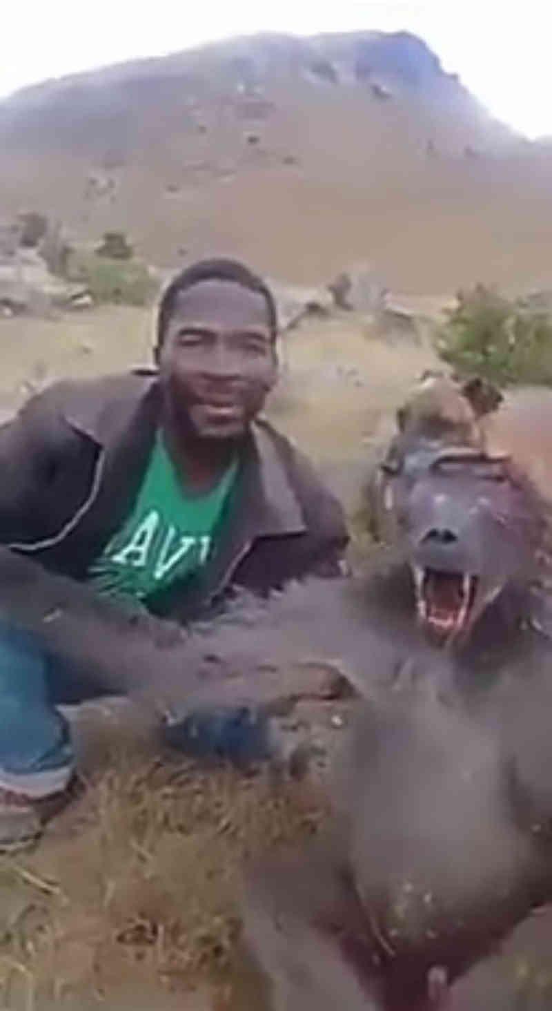 Associação oferece recompensa por homem suspeito de caçar babuíno na África do Sul