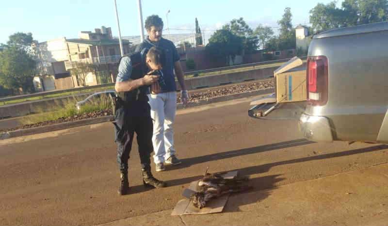 Horror na Argentina: um cão morreu depois de ser queimado vivo com água e plástico quentes