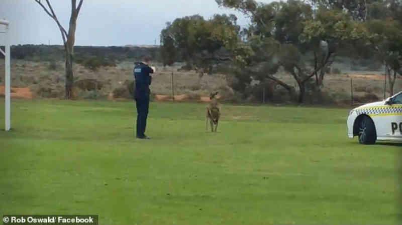 Policial que atirou sete vezes em canguru ferido é bombardeado por ativistas dos direitos dos animais