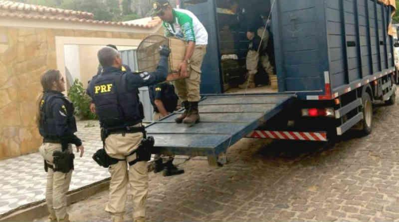 FPI encerra primeira semana com 373 animais resgatados, apreensão de armas e destruição de 40 fornos de carvoaria na Bahia