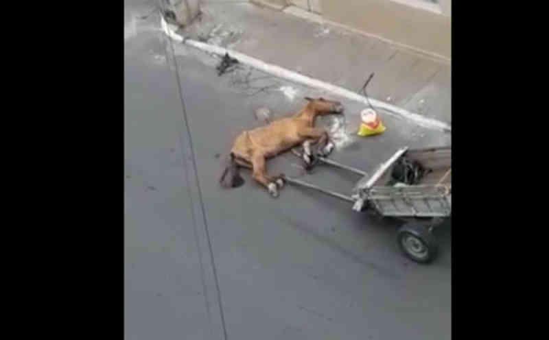Vídeo de cavalo com sinais de maus-tratos revolta população em Vitória da Conquista, BA