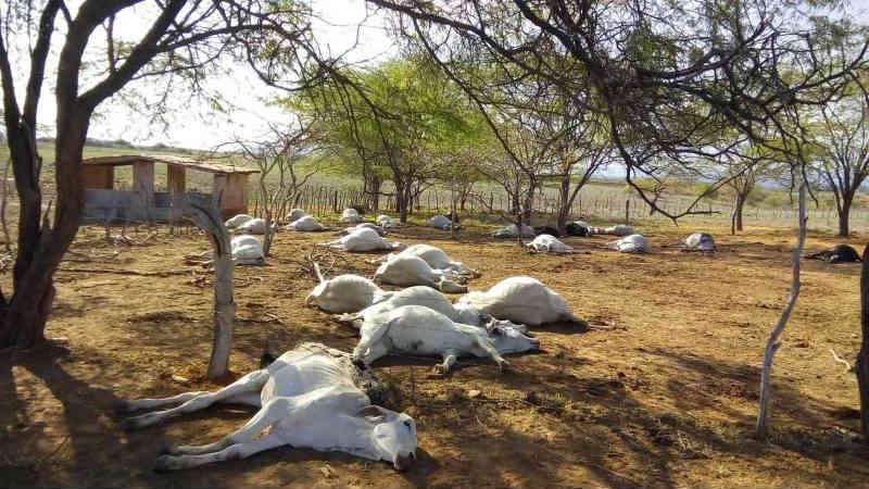 Mais de 100 animais morrem em um intervalo de dois dias na Bahia; suspeita é de intoxicação alimentar