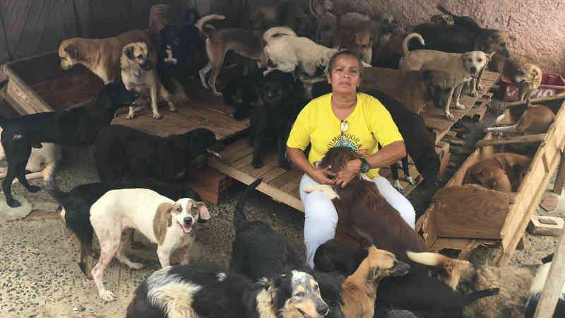 Mulher na BA cria em casa mais de 300 cães e 48 gatos achados na rua e faz apelo por doações: 'São 3 mil quilos de ração por mês'