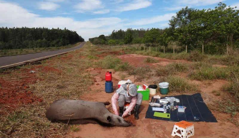 Antas contaminadas alertam uso de agrotóxicos proibidos no Brasil