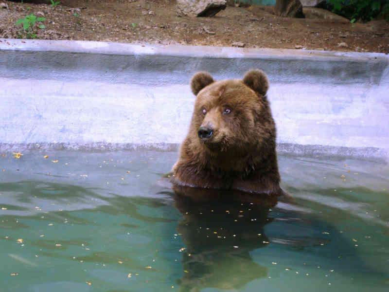 Jaula de ursos em Canindé (CE) é vistoriada por fiscais da Semace