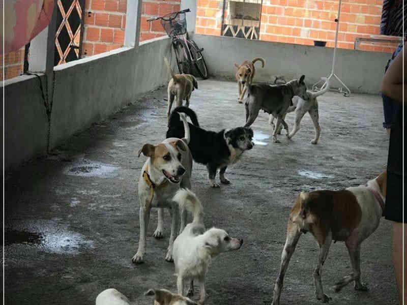 Abrigo em Fortaleza (CE) nega denúncia de abandono e maus-tratos de animais