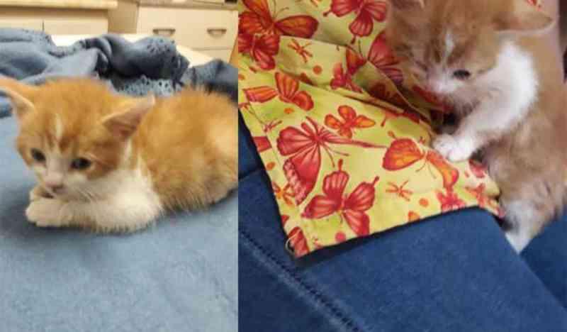 Tortura e morte de filhotinha de gato provoca indignação nas redes sociais