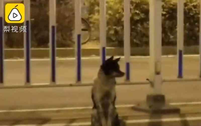 O site Pear Video disse que o cachorro está neste local desde que sua tutora morreu, em 21 de agosto — Foto: Pear Video