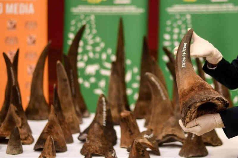 China suspende alteração que iria permitir o comércio de tigre e rinoceronte