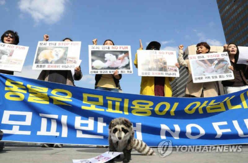 Ativistas se manifestam contra a importação de peles de animais na Coreia do Sul