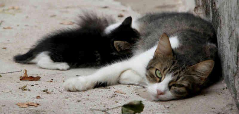 Na Croácia, as leis de proteção animal são apenas uma peça do quebra-cabeça