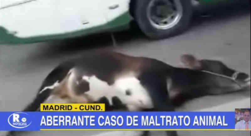 Em vídeo ficou registrado o caso aberrante de maus-tratos a animais no município de Madrid, na Colômbia
