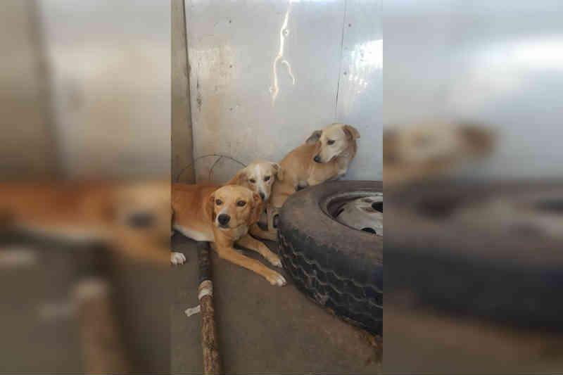 Cachorros resgatados no DF após maus-tratos precisam de adoção