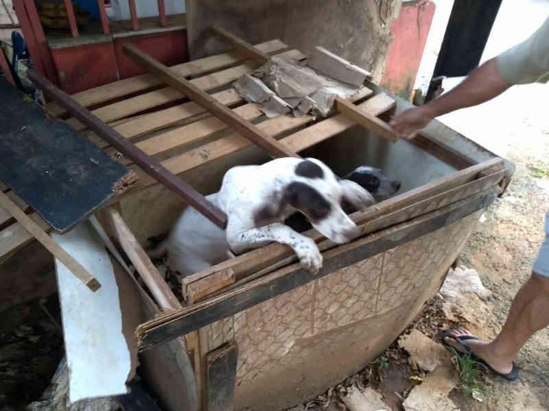 Cães explorados para caça são encontrados dentro de caixa no DF, sem água nem comida