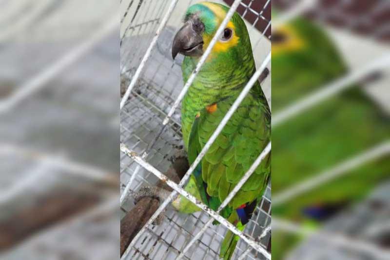 Em operação, Polícia Militar resgata 25 aves silvestres com sinais de maus-tratos no DF