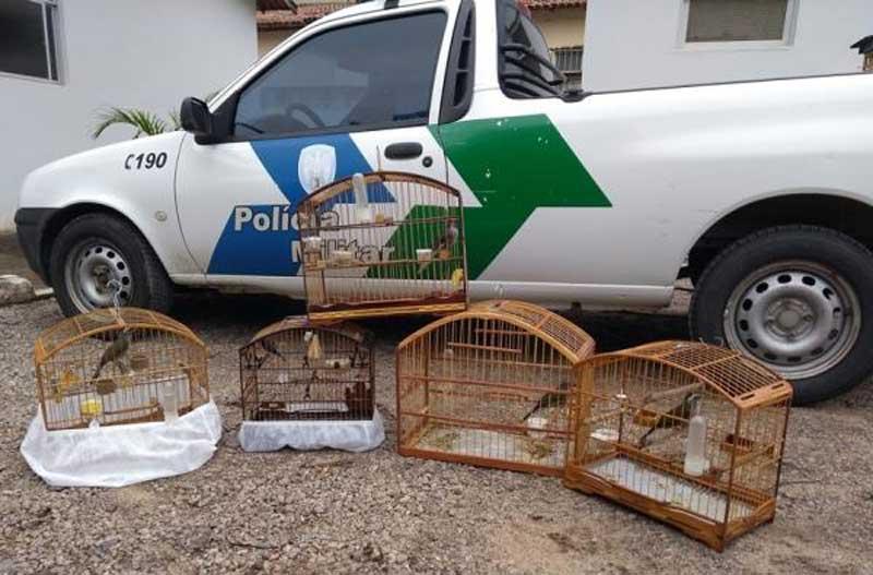 PM recolhe pássaros que eram mantidos em cativeiro em Colatina, ES