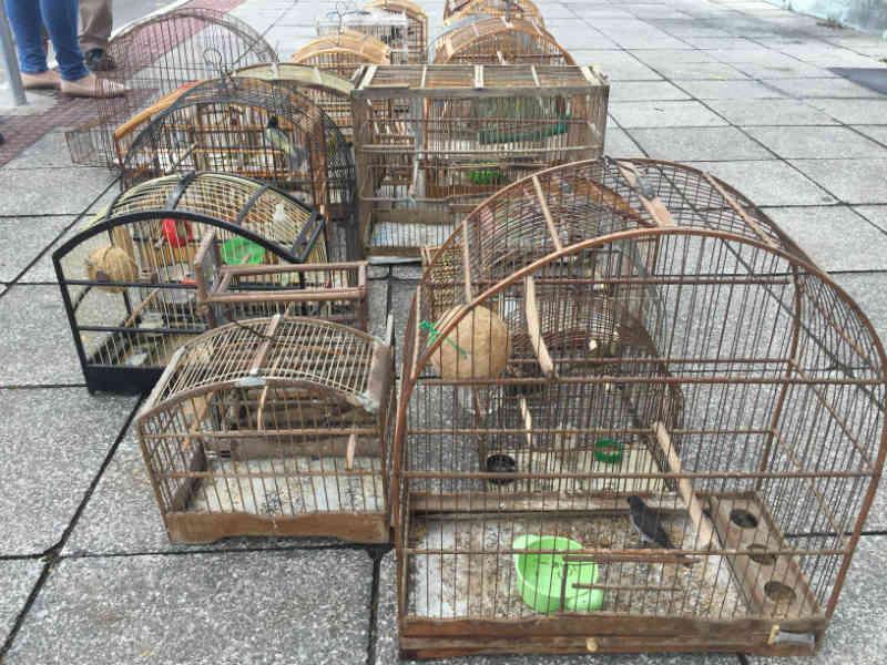 Mais de 20 aves silvestres são resgatadas em cativeiro, na Serra, ES