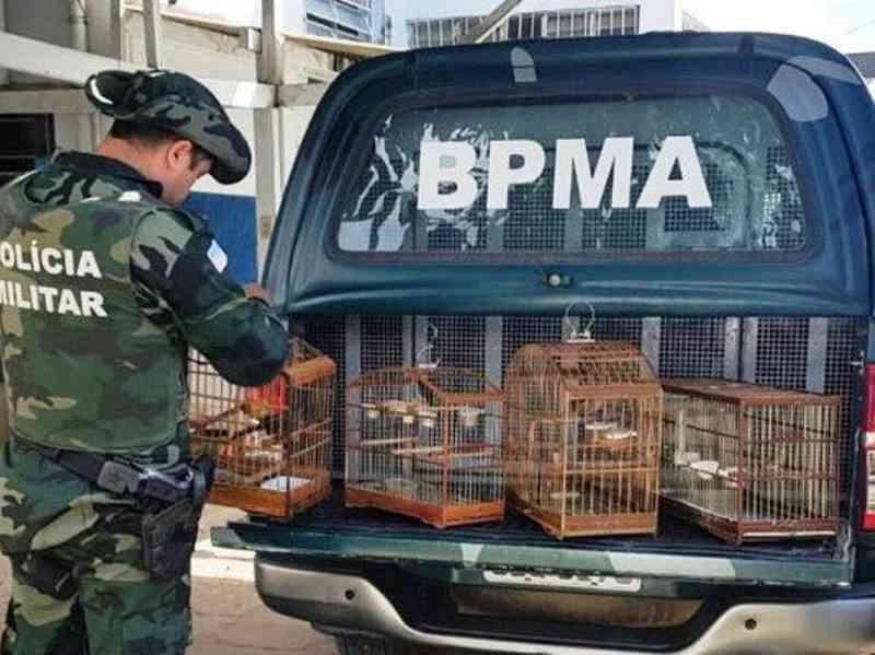 Quatro pássaros silvestres são apreendidos em Alegre, ES
