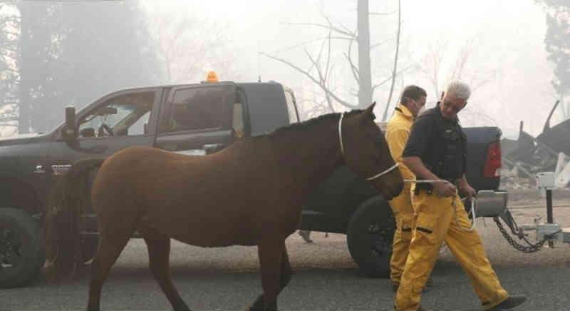 Equipes correm para resgatar animais de incêndio na Califórnia, EUA