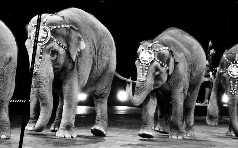 EUA: estado de Nova Jersey está perto de proibir animais selvagens em circos