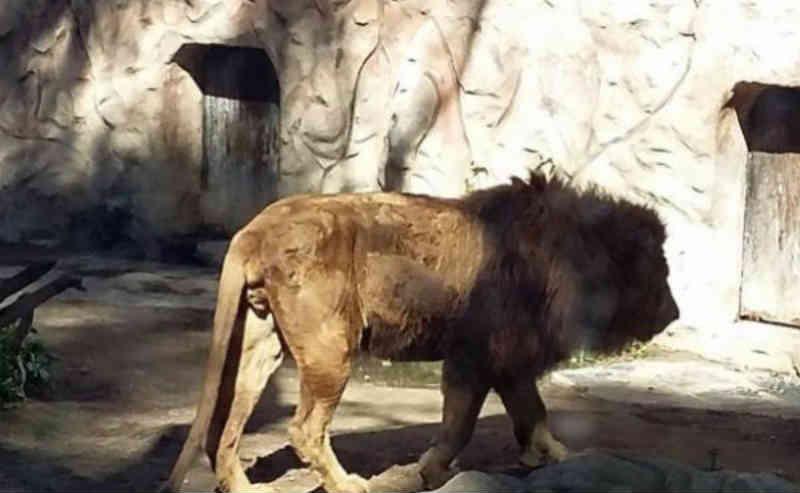 Espanha: Prefeitura de Ayamonte busca abrigo para animais de zoológico que fechará em breve e dará lugar à realidade virtual