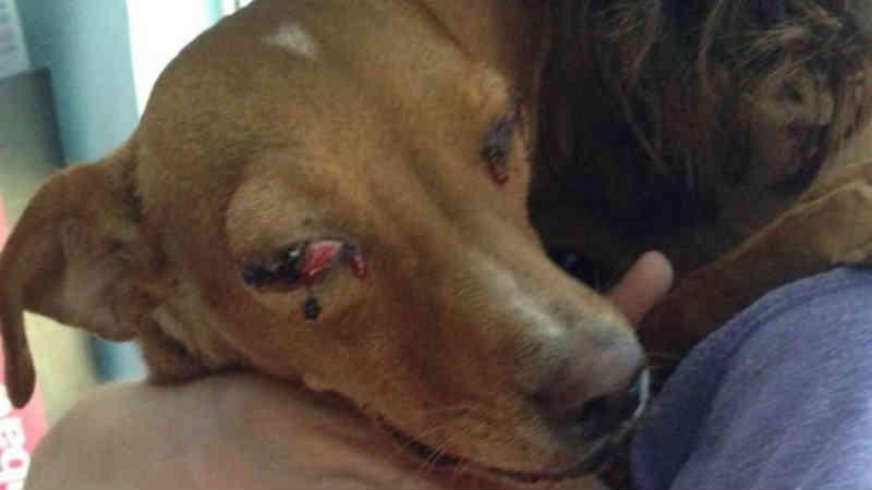 Um grave caso de maus-tratos a cão chega a julgamento em Albacete, na Espanha