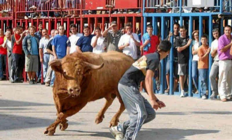Morre um touro após participar dos Festejos Taurinos de Moncofa, na Espanha