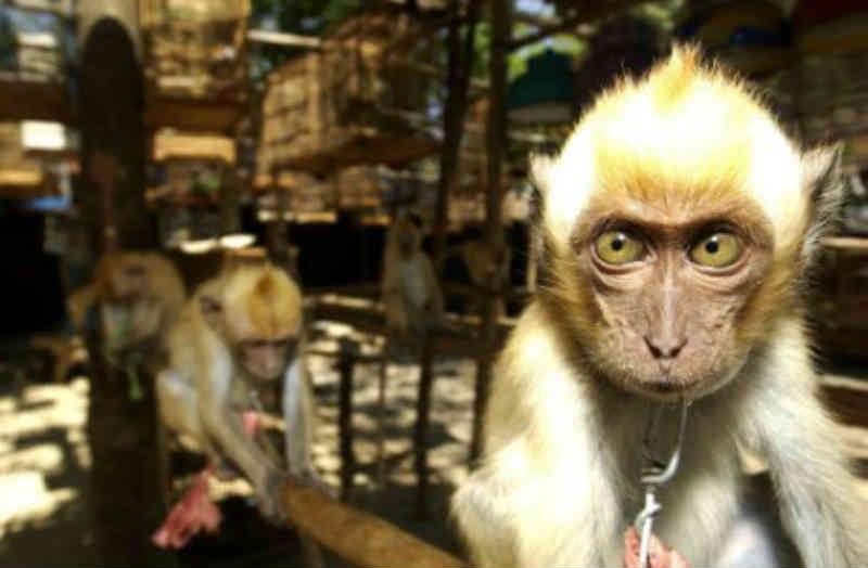 Espanha: a porta do tráfico ilegal de animais na Europa
