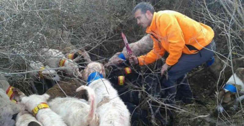 Espanha: Cinco vídeos que mostram a crueldade e brutalidade da caça contra os animais