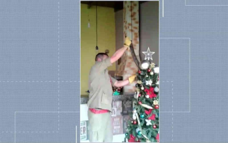 Família encontra jiboia enrolada em árvore de Natal, em Inhumas, GO; veja vídeo