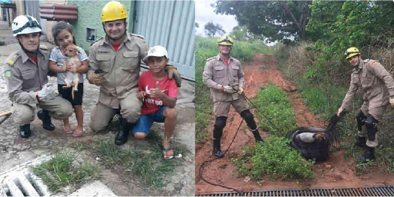 Corpo de Bombeiros faz resgates de dois animais em Goiás