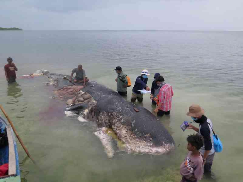 Baleia cachalote encontrada morta em ilha na Indonésia — Foto: Reuters