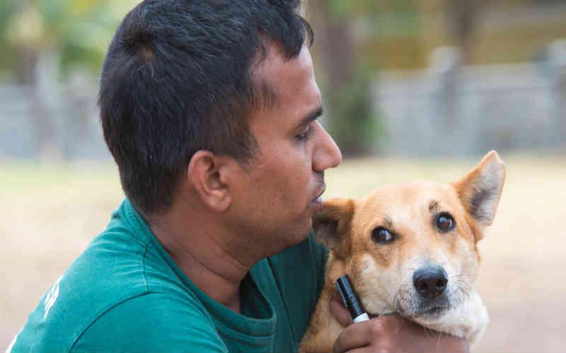 Milhares de cães de rua nas Ilhas Maurício serão poupados de abate brutal graças à clínica de castração