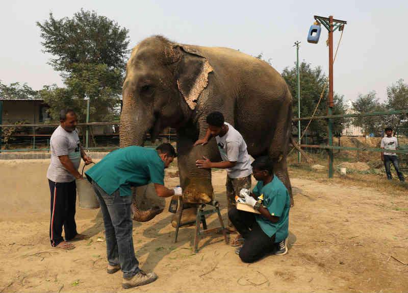 Primeiro hospital de elefantes da Índia é inaugurado