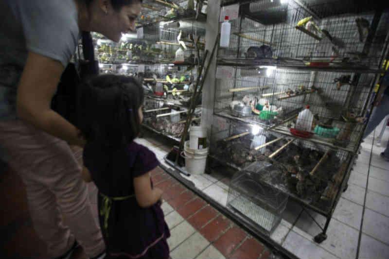 Justiça mineira mantém decisão que permite venda de animais no Mercado Central