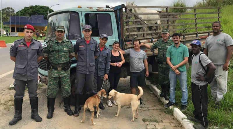 Animais são resgatados nesta terça no Caiçara e Quinta Residência, em Leopoldina, MG