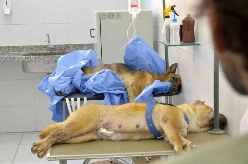 'Castramóvel' recebe inscrições para esterilização de cerca de 400 cães e gatos em Coronel Fabriciano, MG