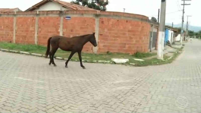 Apreensão de animais de grande porte soltos é aprovada pela Câmara de Divinópolis, MG