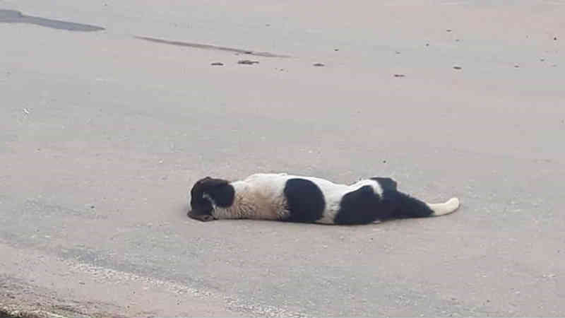 Cães e gatos são encontrados mortos em distrito de São Domingos do Prata, na região central de Minas Gerais