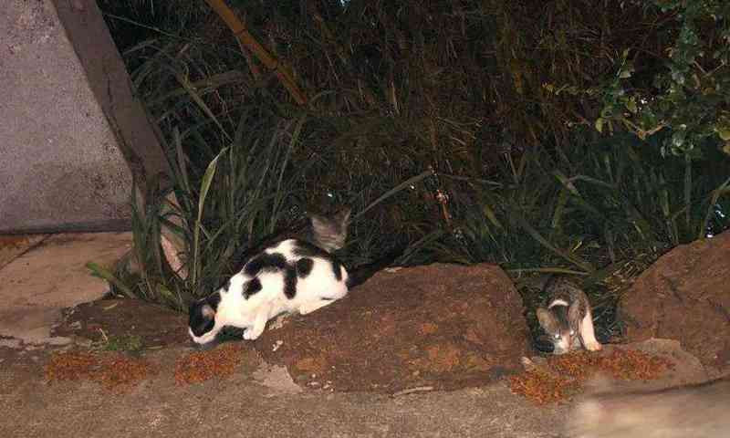 Gatos são alimentados em rua do Bairro Gutierrez (Foto: Daniela Pereira (MMDA))
