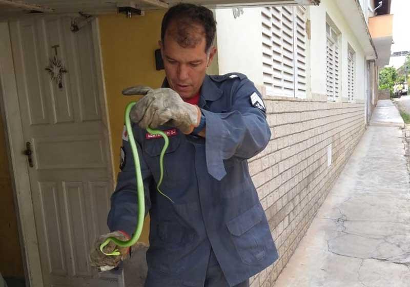 Bombeiros capturam serpente na região central e resgatam filhote de gato às margens da BR-116 em Leopoldina, MG