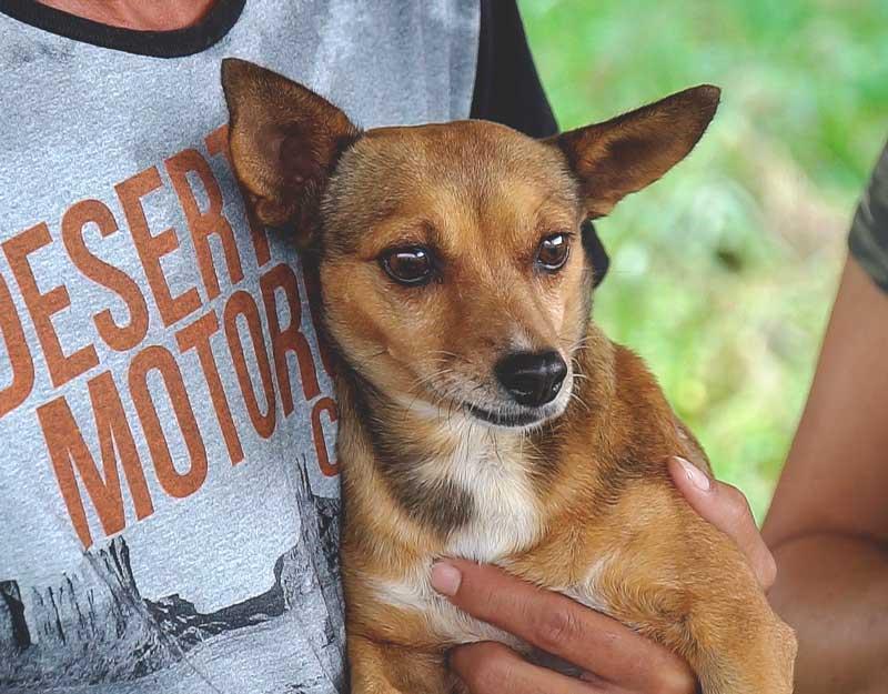 40 animais ganham novos tutores na Campanha de Adoção de Cães e Gatos do Canil Municipal de Patrocínio, MG