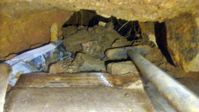 Animais foram retirados de buraco de residência em Poços de Caldas — Foto: Corpo de Bombeiros
