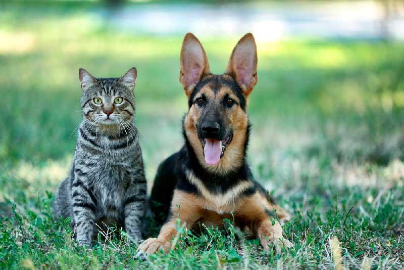 Prefeita sanciona lei que autoriza Criação do Conselho Municipal de Proteção Animal em Mossoró, RN