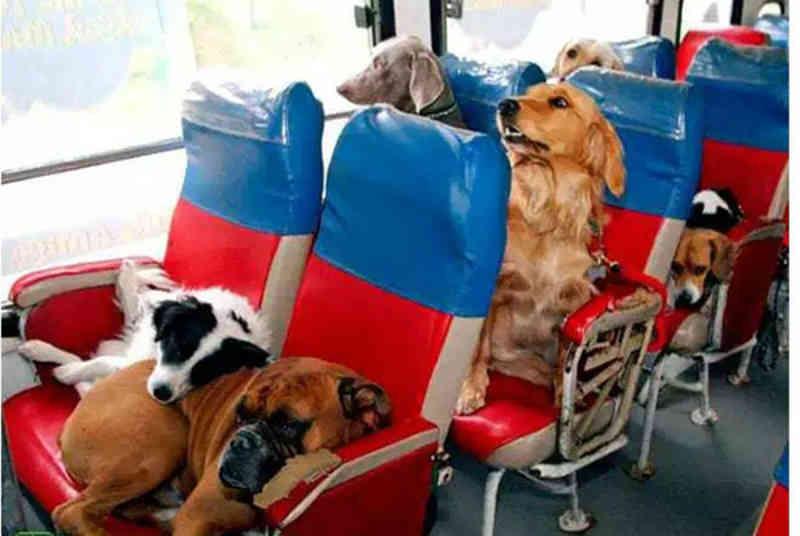 Lei que garante cães e gatos viajando com tutores em ônibus começa a valer em MS